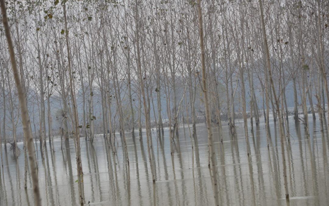 """Lunedì 14 dicembre """"Paesaggi fluviali. Per un grande progetto: la Riserva MaB UNESCO Po Grande"""""""
